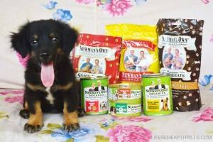 NEWMAN'S OWN ORGANICS PET FOOD GIVEAWAY